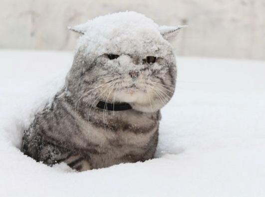 Снег в Морозовске может пойти уже в ночь с воскресения на понедельник