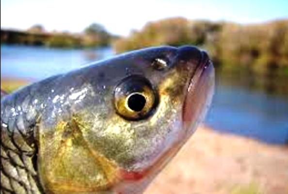Вопрос-ответ: Почему в Морозовске на реке Быстрой гибнет рыба?