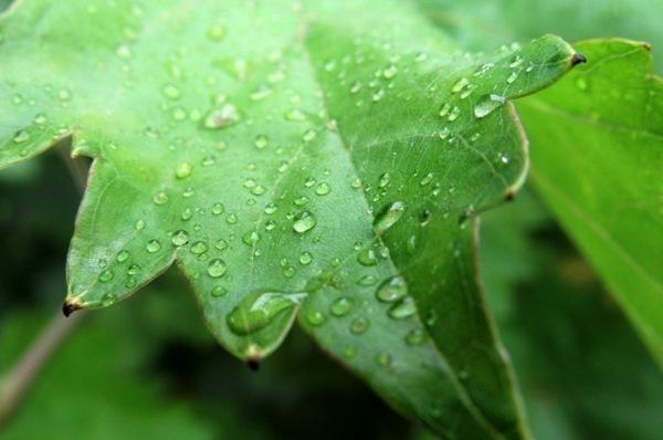 В Морозовске после ужасной жары закапал легкий дождь