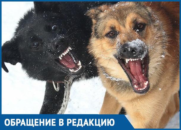 Стая собак напала на женщину в Морозовске возле аптеки