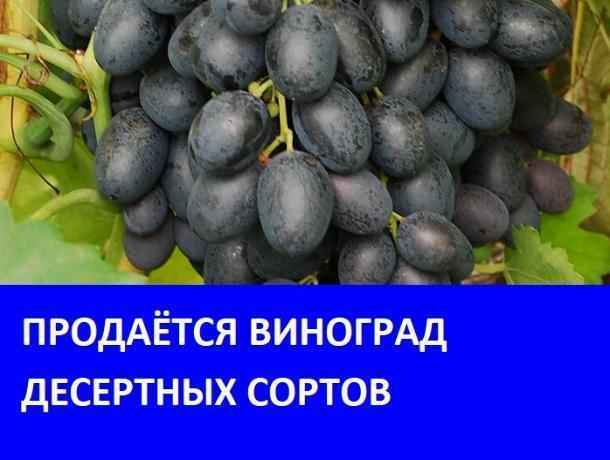 Продается виноград в Морозовске