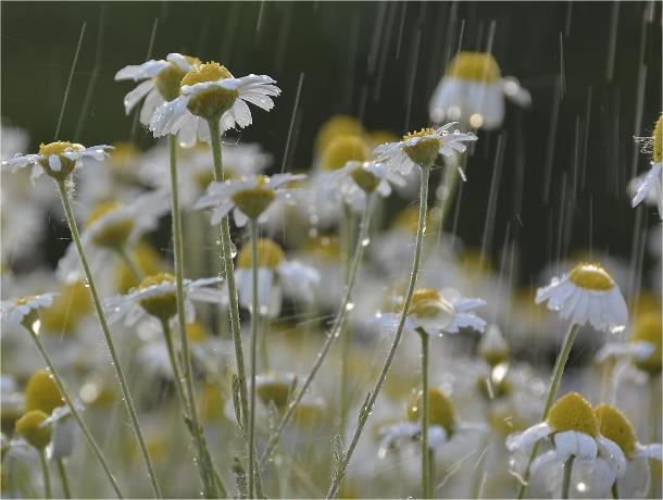 Небольшой дождь в Морозовске может начаться лишь к ночи 20 мая