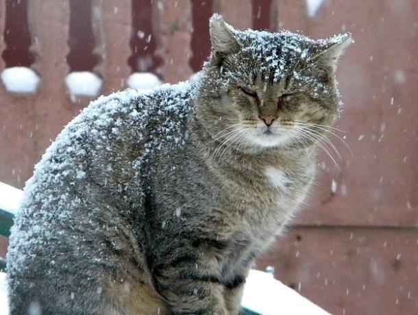 Пониженное атмосферное давление и сильный снегопад ожидается в Морозовске 17 января