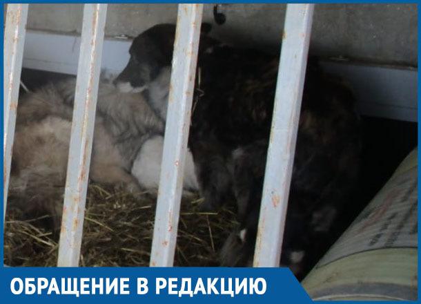Отлов собак в Морозовске по заявлениям одних жителей вызвал сильное возмущение других