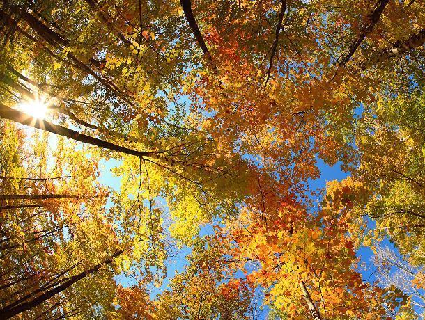Теплую и солнечную погоду обещают морозовчанам в субботу, 13 октября