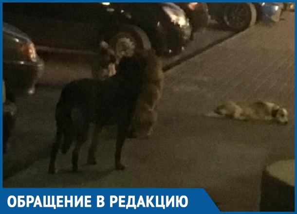 Бродячие собаки в районе Тексера кидаются на детей, - морозовчанка