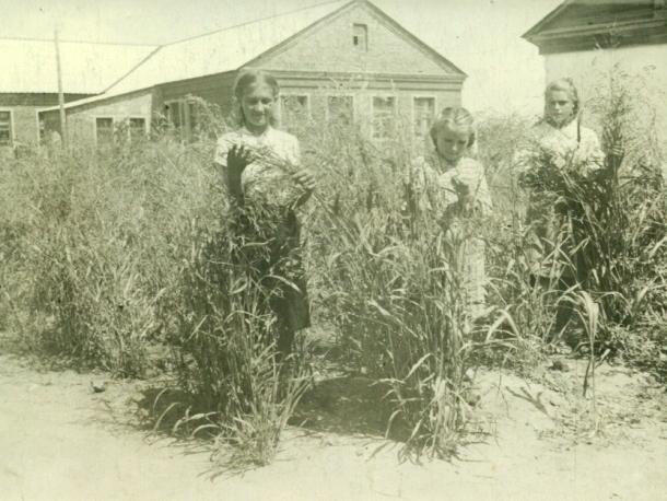 История «Луначарки»: Как появилась школа в хуторе Любимове