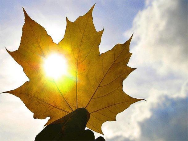 Теплую и солнечную погоду обещают синоптики морозовчанам в четверг, 20 сентября