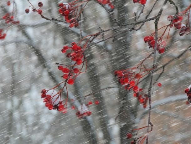 Повышенное давление, ветер и снег прогнозируют морозовчанам на четверг, 15 ноября