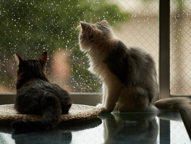 Все, что вам нужно - просто захватить зонт: в Морозовске установилась дождливая погода