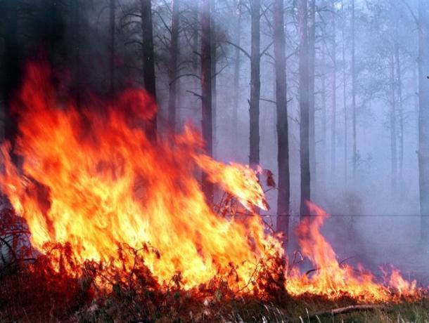 Особенности лесных пожаров в Морозовском районе назвали спасатели