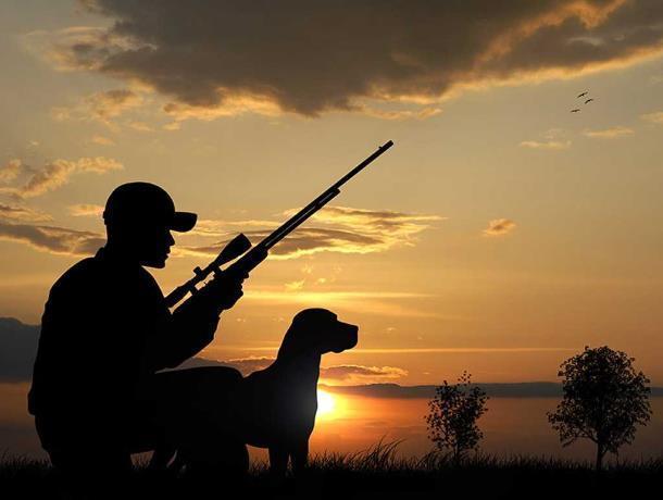 Открыт сезон охоты: установлен лимит добычи охотничьих ресурсов на Дону