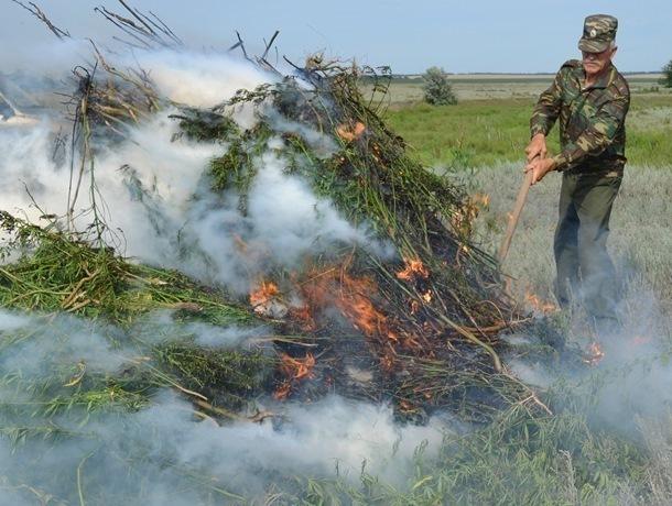 Около двух тонн дикорастущей конопли облили соляркой и сожгли в Морозовском районе