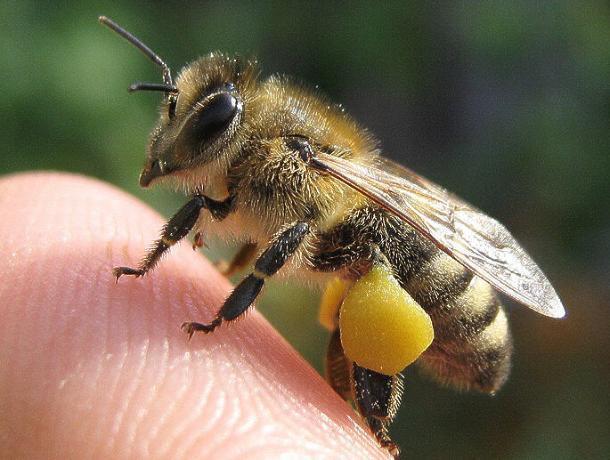 Пчеловод из Морозовска на видео показал, как давать лекарство пчелам