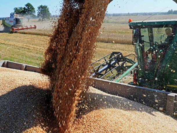 Более 240 тонн зерна и бобовых собрали аграрии Морозовского района в 2018 году