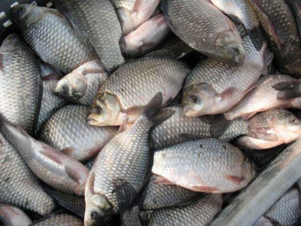 ВМорозовском районе Ростовской области выявлено 700кг подозрительной рыбы