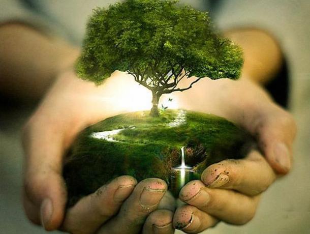 Морозовчан пригласили принять участие в озеленении родного города