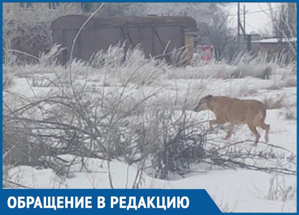 Осторожно, собака кусается, - морозовчанка предупредила жителей улицы Авдеева