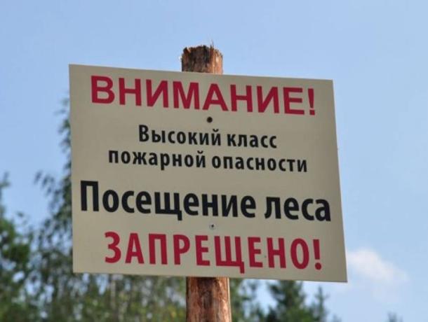 Сроки запрета на посещение леса продлили до конца июля