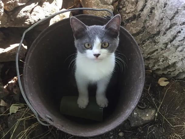 Во время экспедиции к лагерю, где работала историк из Морозовска, прибился котенок с поврежденными лапками