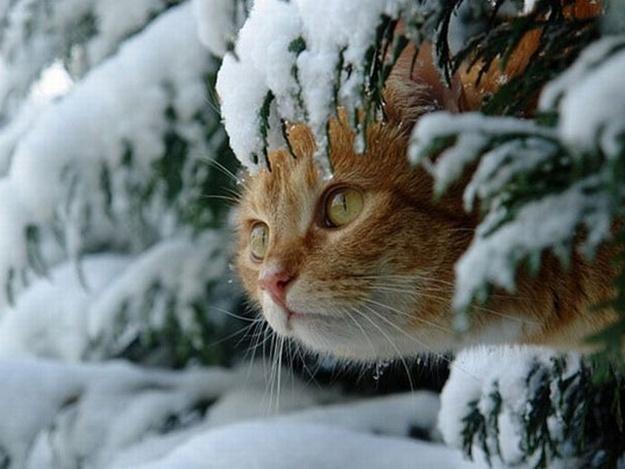 Суббота будет для Морозовска относительно теплой