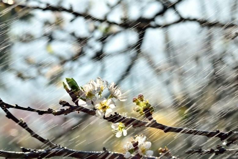 Теплым дождем ознаменуется середина апреля в Морозовске