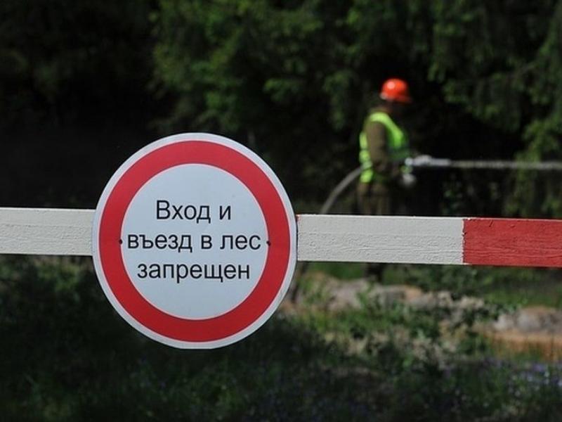 Лес под запретом: на Дону ввели временное ограничение