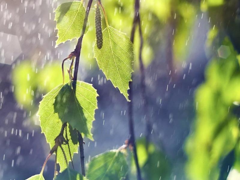 Небольшой дождь и до 22 градусов тепла обещают морозовчанам в четверг, 23 мая