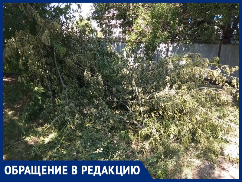 Нас бы сразу оштрафовали, - морозовчанка о наваленных ветках на улице Ворошилова