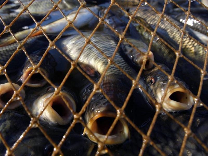 Лишение свободы до двух лет: под Морозовском задержали браконьера