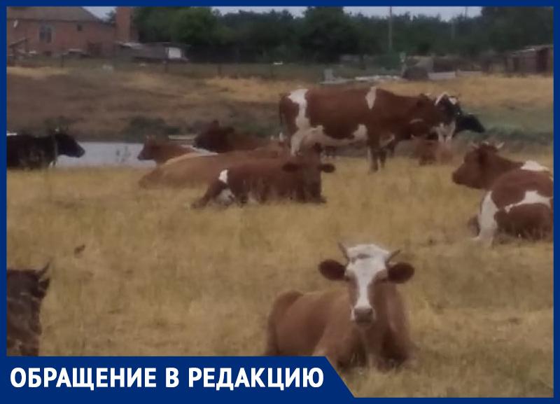 Две деревни просто убивают: жители хутора Великанов и станицы Чертковская в Морозовском районе остались без пастбищ и сенокосов