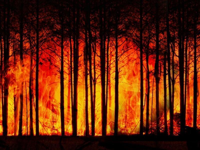 Экстренное предупреждение: в ближайшие несколько дней на Дону ожидается высокая пожароопасность