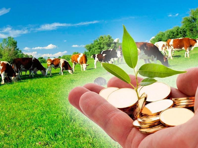 Морозовчане, имеющие личное подсобное хозяйство смогут оформить соцподдержку с учетом полученных доходов