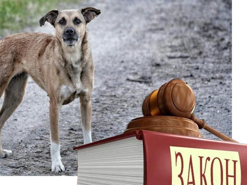Новый закон «Об ответственном обращении с животными» в России всупит в силу с 1 января