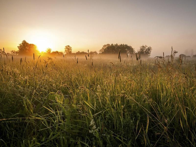 Штраф 20 тысяч рублей получил морозовчанин за сорную траву и кустарник на земельном участке