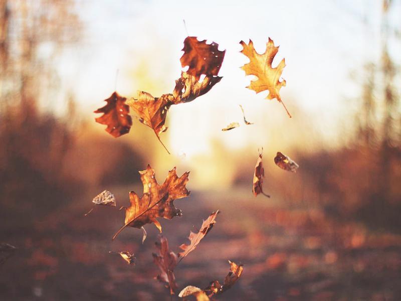 Ветреная и холодная погода сохранится в Морозовске и в субботу