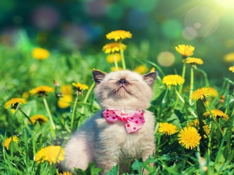 Тепло, но не жарко будет в Морозовске в воскресенье, 19 мая