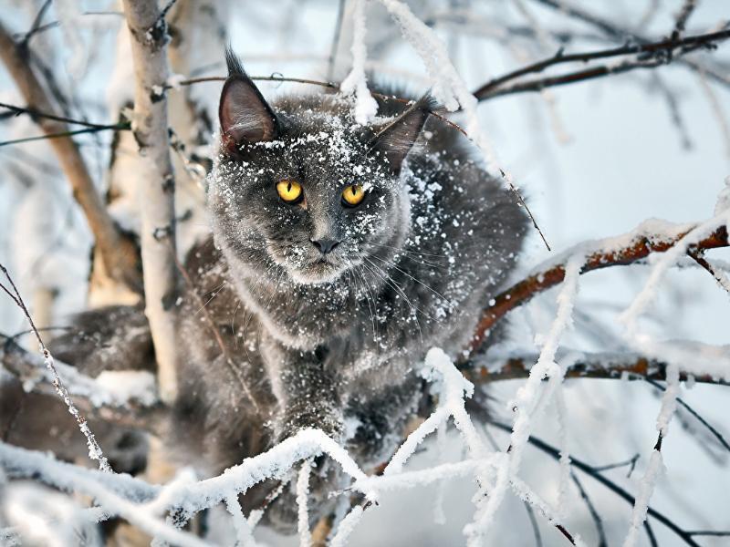 Одевайтесь теплее: второй день рабочей недели в Морозовске будет холоднее обычного