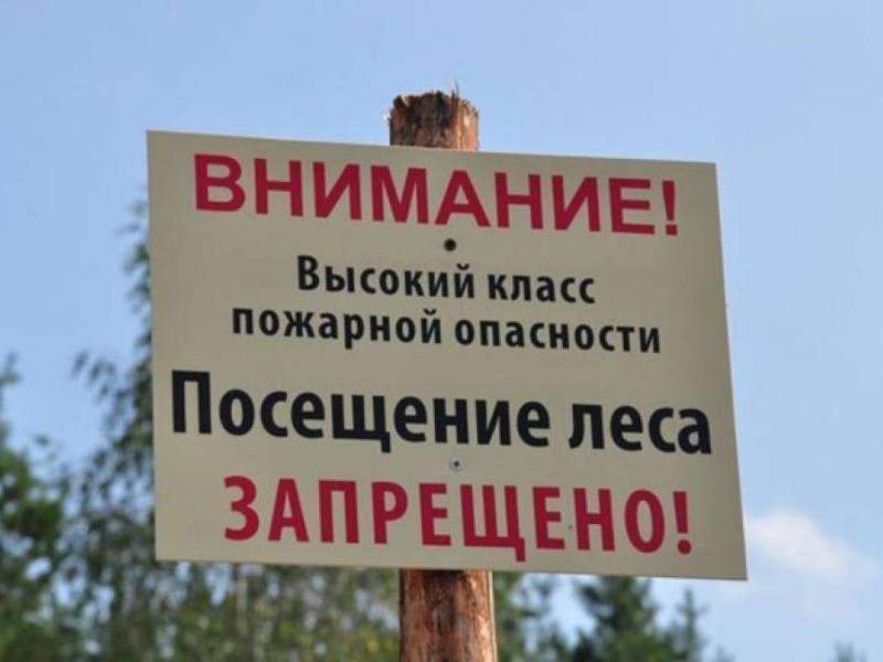 Запрет на посещение донских лесов продлили до 21 сентября