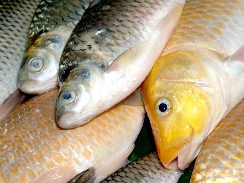Почти 3 тонны рыбы и более 1 тонны мяса без документов задержали на посту ДПС под Морозовском
