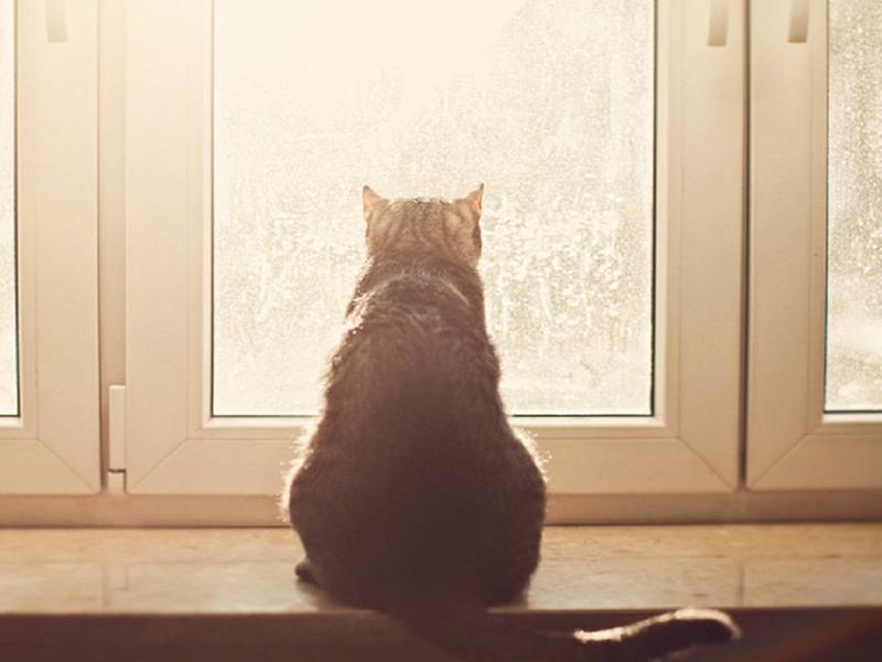 Ясным, но холодным станет для морозовчан четверг, 14 марта