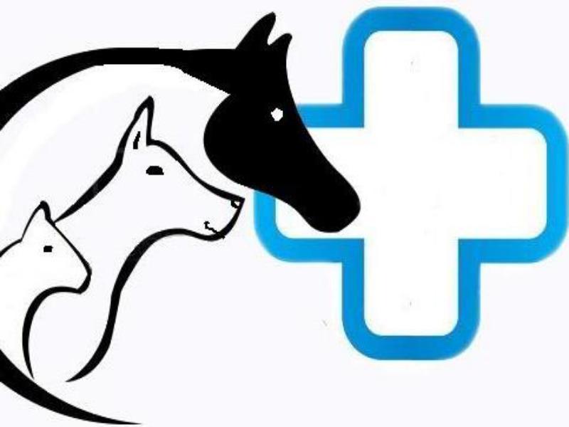 Приглашаем ветеринарного врача на должность продавца-консультанта в ветаптеку Морозовска