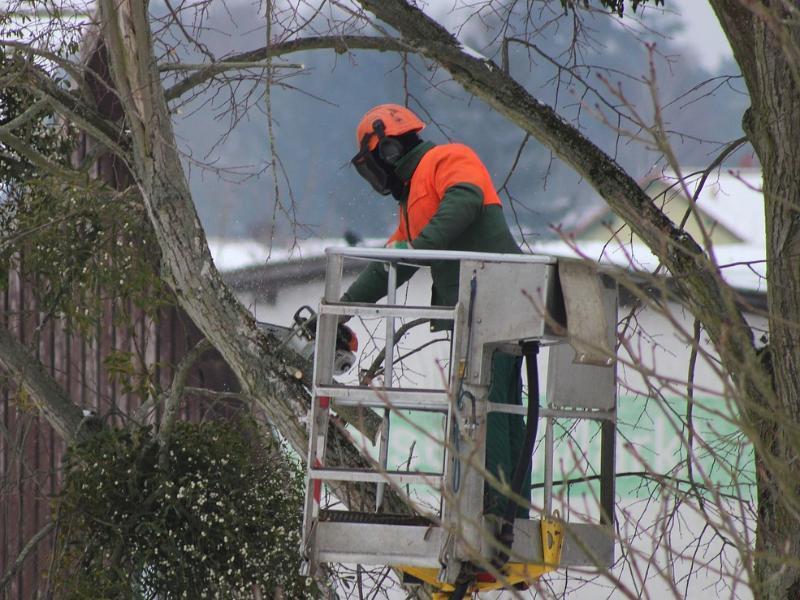 Обрезка деревьев оставит без света значительную часть Морозовска