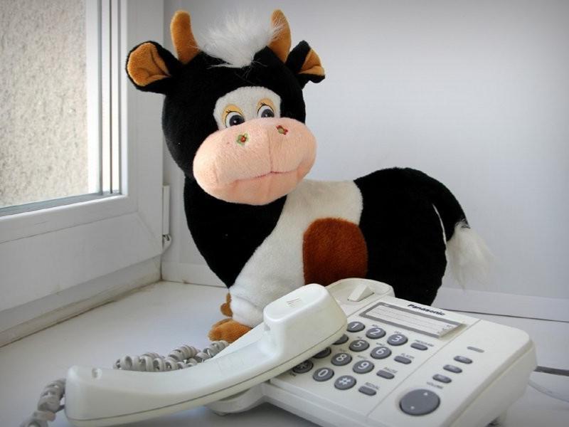 Задать вопрос специалисту об организации детского отдыха морозовчане смогут сегодня, по телефону «горячей линии»