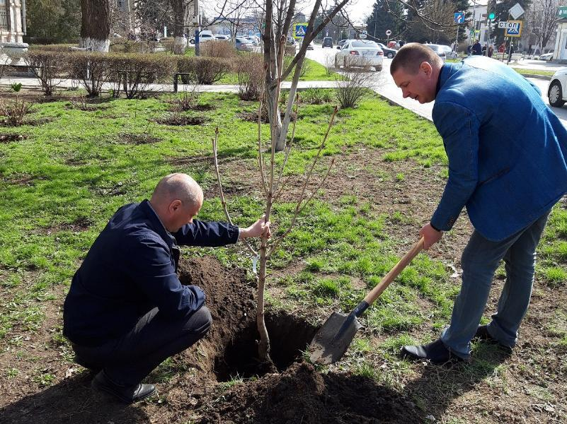 Пять каштанов и шестьдесят различных  кустарников посадили в Морозовске в областной День древонасаждения
