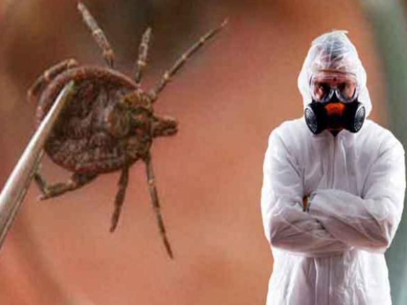 Вирус крымской геморрагической лихорадки обнаружен в Морозовском районе