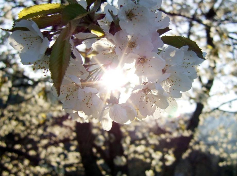Погода в конце апреля в Морозовске заметно улучшится