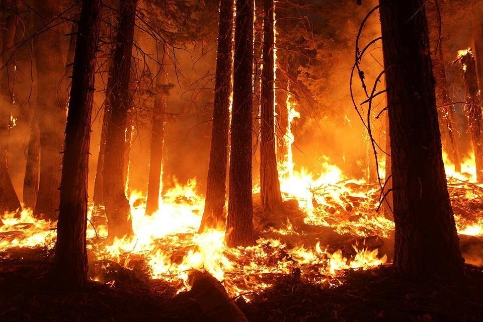 Ожидается чрезвычайная пожароопасность местами по Ростовской области