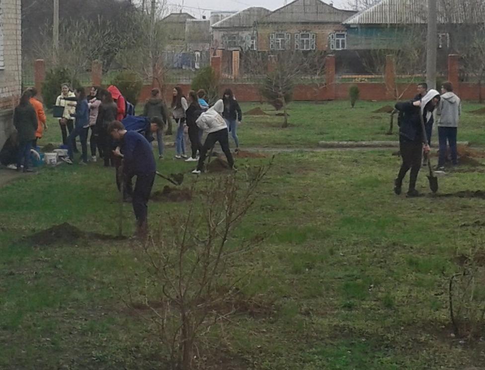 Новыми молодыми деревцами пополнилась зеленая зона школы №4 в Морозовске
