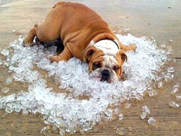 Дождей не ожидается: морозовчан снова ждет жара